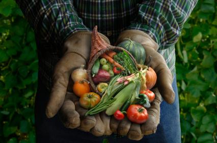 harvest_hands.jpg