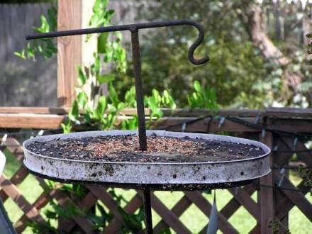 Bird feeding 5