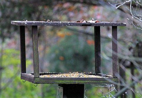Bird feeding 6
