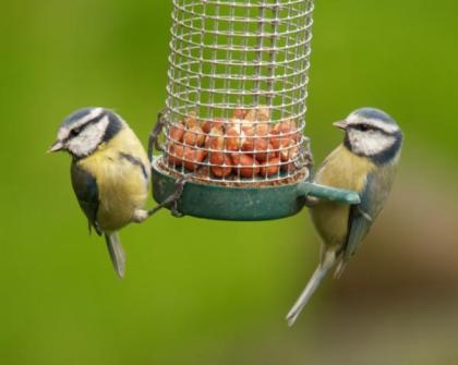 Bird feeding 7