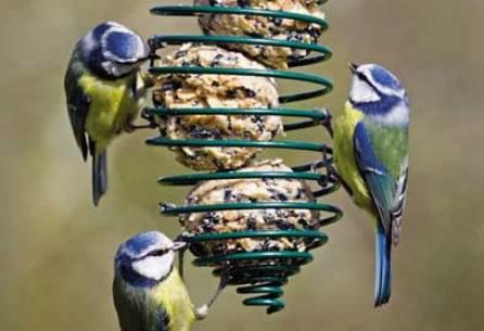 Bird feeding 9