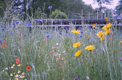 bloemenweide 12